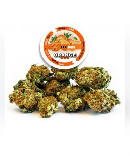 Orange Bud xxxjoint roma
