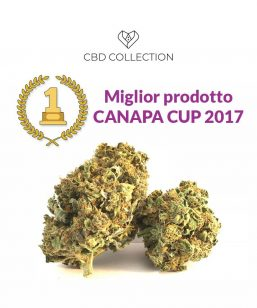 seed of love italian kiss cbd collection