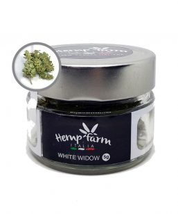 white widow hemp farm italia